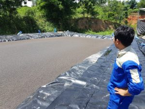 Trại heo Tám Do Bầu Cạn Đồng Nai 100m3